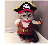 Pirate Captain Dog Clothes For Pets Cat