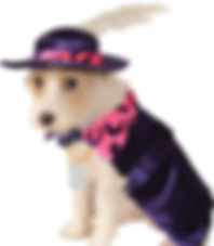 Mac Daddy Pimp Dog Costume.jpg