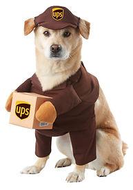 UPS DOG COSTUME.jpg