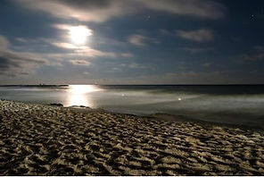 night-beach-moonlight-260nw-1134475979_e