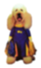 Pom Pom Cheerleader Pet Costume, Dog, Im