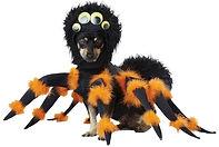 Pet Spider Costume.jpg