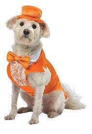 Dumb and Dumber Lloyd Pet Costume.jpg
