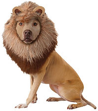 Pet Lion Costume.jpg