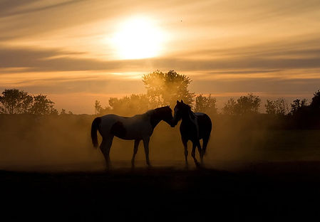 Silhoutte Horses
