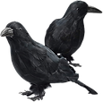 Feathered Crows Halloween