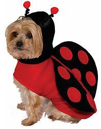 Lady Bug Pet Costume Red & Black Hoodie
