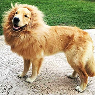 Pet Costume Lion Mane Wig Ears for Large