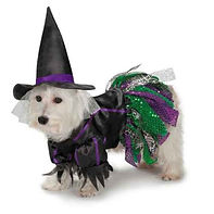 Zack and Zoey Scary Witch Dog Puppy Pet