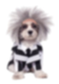 BEETLEJUICE PET COSTUME.jpg
