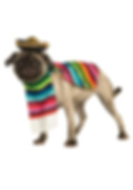 MEXICAN SERAPE PET COSTUME.jpg