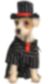 Gangster Pet Costume.jpg