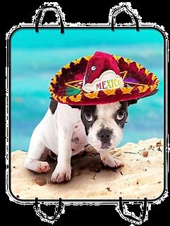 French Bulldog Sombrero