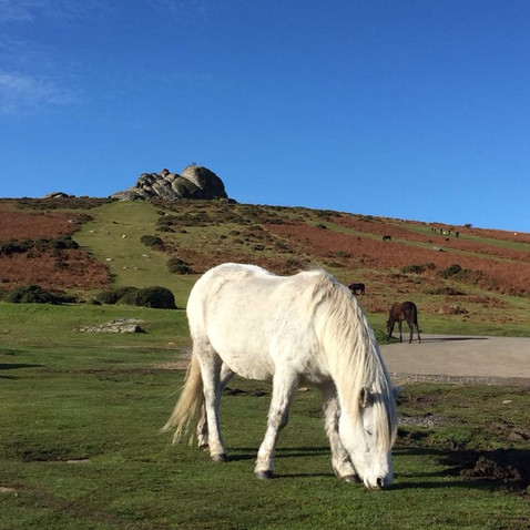 Dartmoor pony with Hay Tor in the background - 30 mins drive