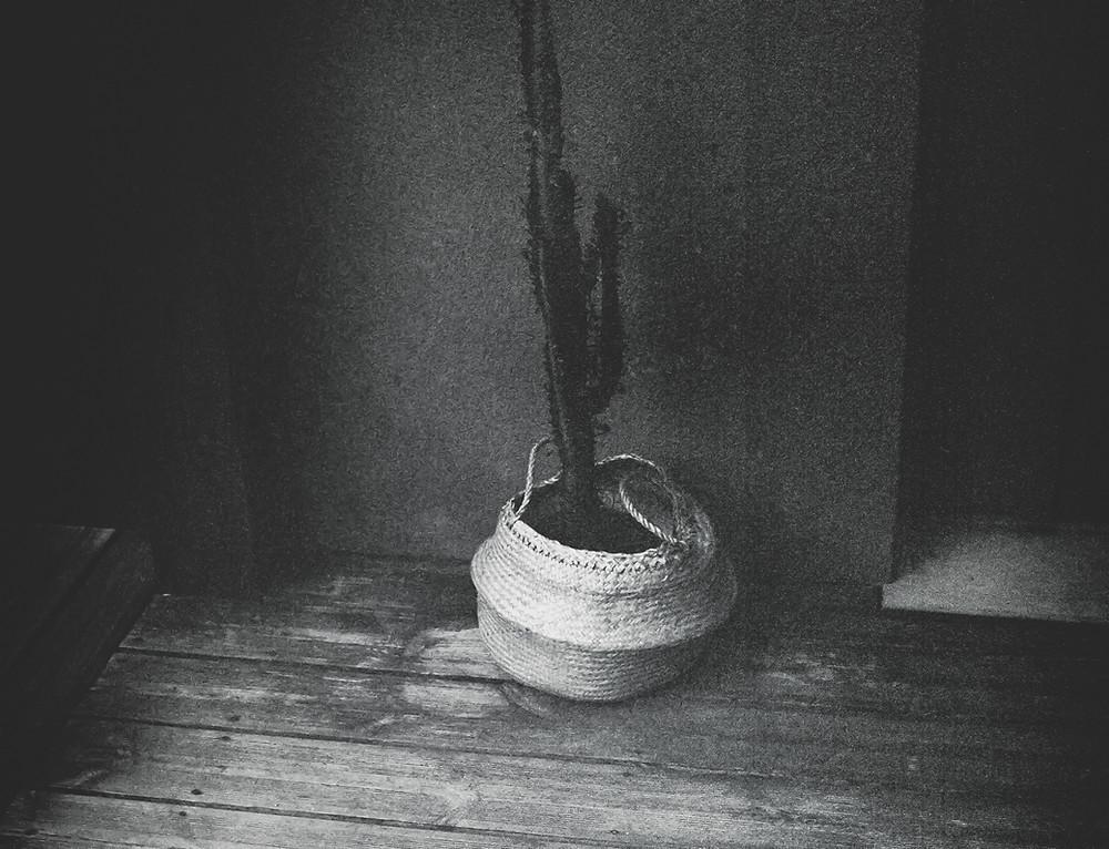 argentique-noir-et-blanc-carterie-affiche-vegetal-fleur-photographie-art