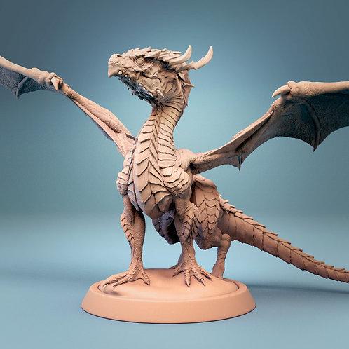 baby/Juvenile  Dragon