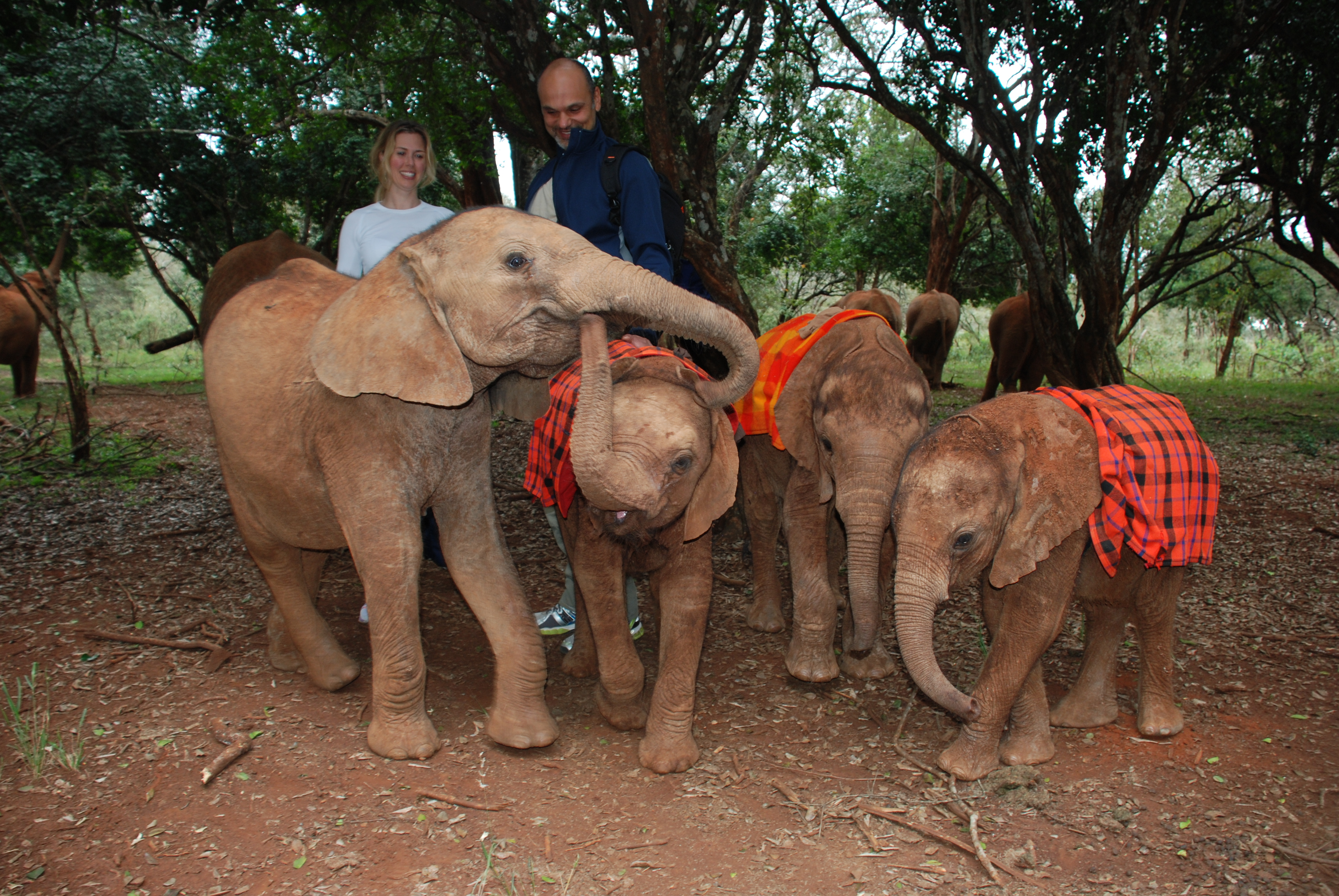 Sheldrick Wildlife Trust, Africa 2014