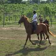 Equestrian Club - Csopak.jpg