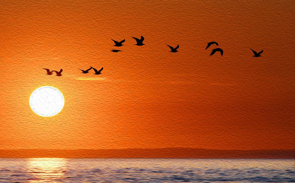 Seagull squadron at sunset.jpg