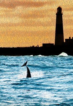 Bottlenose dolphin and Portland Bill lig