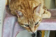 cistite felina, Alimentação Natural, Felv
