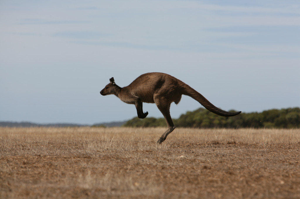 Southern-Ocean-Lodge_Kangaroo-Island_Abundant_Wildlife-1024x682.jpg