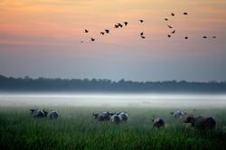 Bamurru-Plains_Top-End_Wetlands.jpg