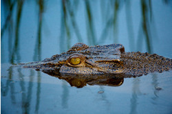 Bamurru-Plains_Top-End_Wildlife-2.jpg