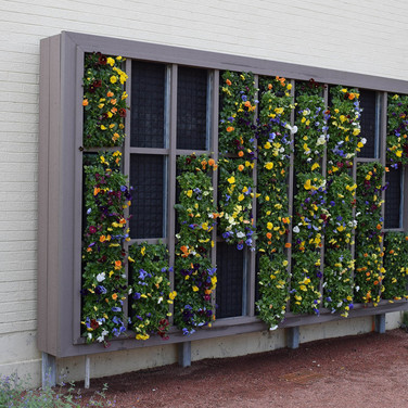 Hamill Plaza living wall