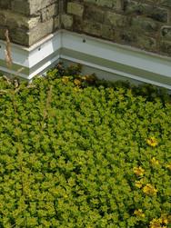 Brewhouse roof.JPG