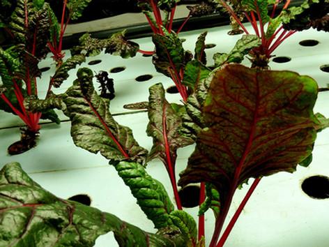 The Plant interior aquaponics.jpg