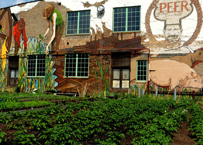Factory-into-Farm Idea Mushrooming on Chicago's South Side