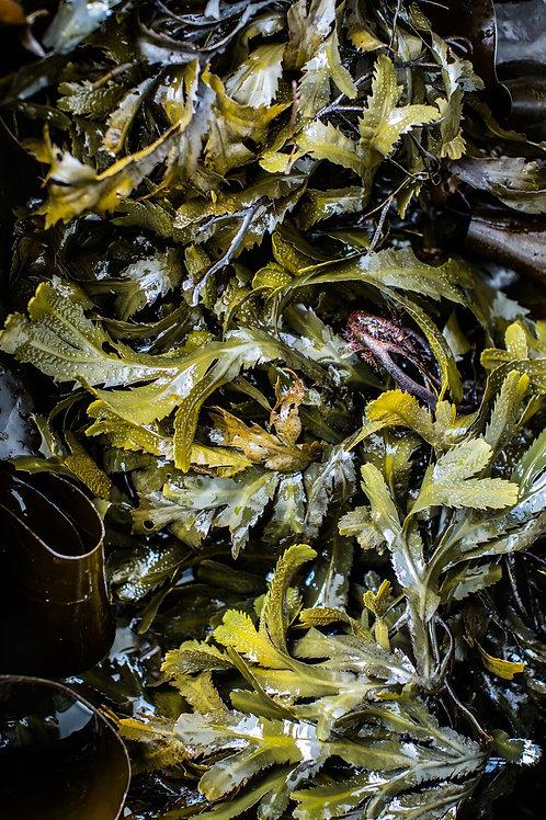 Voya Lazy Days Seaweed detoxifying bath (box)