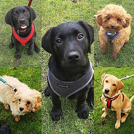 The fabulous five from the last puppy co