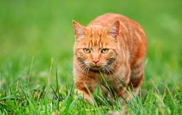 cat outside.jpg