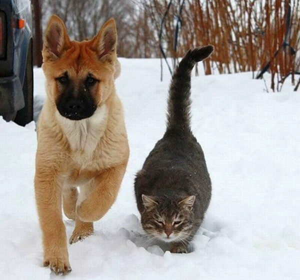 cat_and_dog_snow_friends_01.jpg