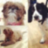 The latest puppy graduates._The gorgeous