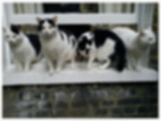 Cat Behaviour Brighton and Hove, cat house soiling, cat aggression, inappropriate urination, cat anxiety,cat behaviour problem, cat fighting, feline behaviourist, cat scratching, cat handling