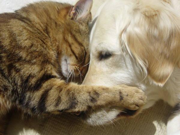 Old-Dog-and-Cat-Sleepy-Embrace.jpg
