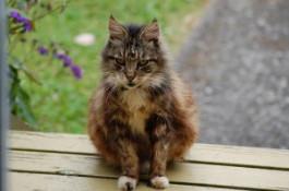 old cat outside.jpg