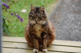 Introducing your feline oldies to the outside!