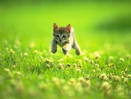 Introducing a new cat or kitten to the great outdoors!