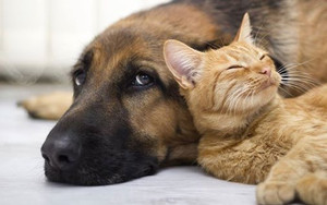 Get your pets behaviour sorted out now with this DISCOUNT!