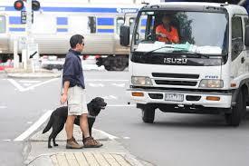 images dog crossing road.jpg