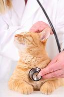 cat-at-vets1.jpg