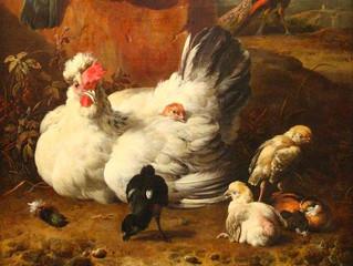 Rameau: La Poule