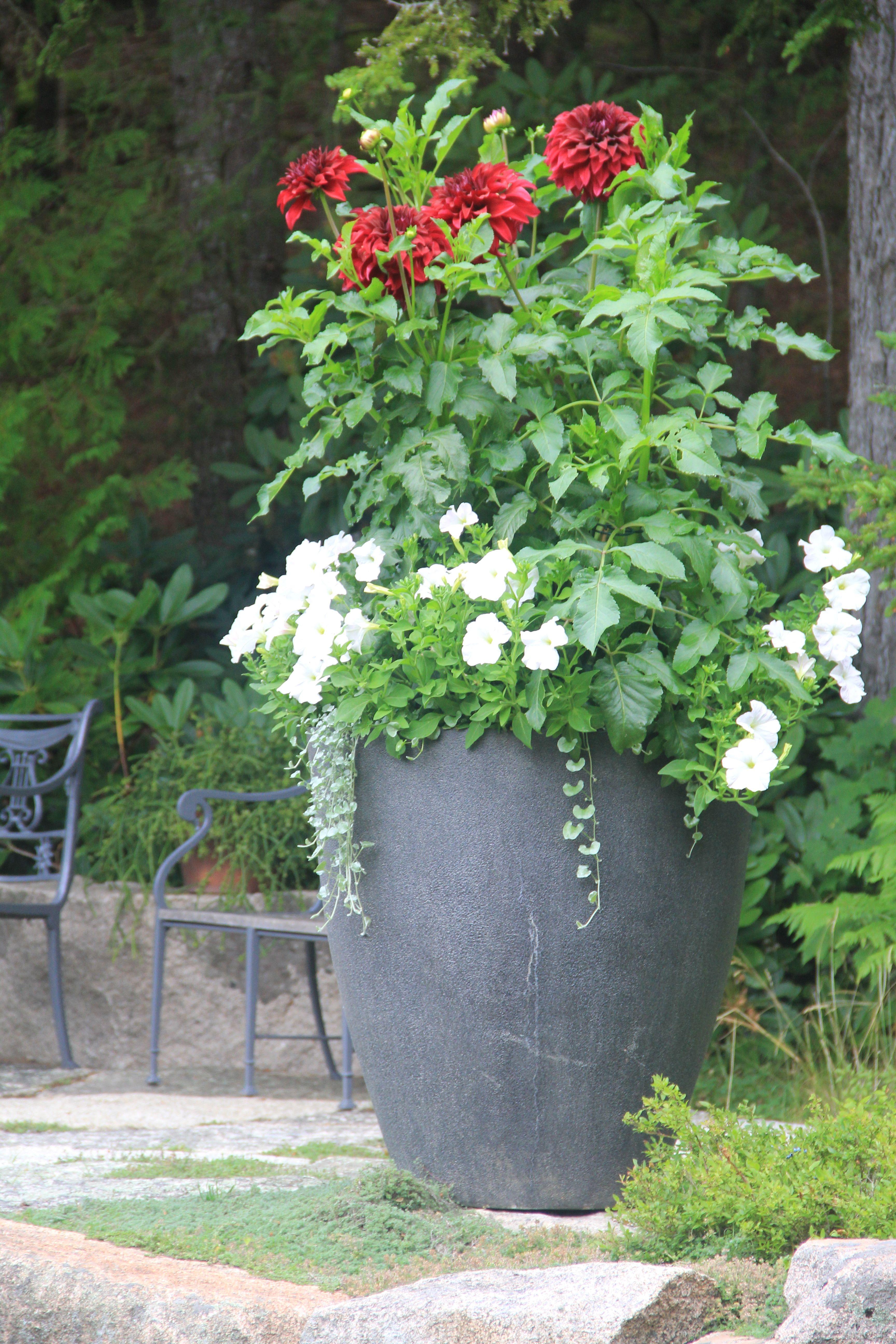 Thuya Garden | Land & Garden Preserve