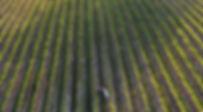 Wedding drone shot of vineyards