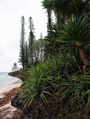 ile des pins  Nouvelle-Calédonie 2013