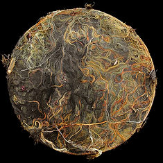 Roots--Villette-2012.jpg